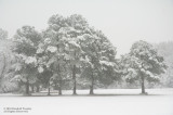 Snowfall-Madison County-01