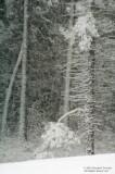 Snowfall-Madison County-02