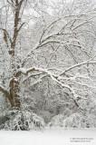 Snowfall-Madison County-03