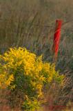 Goldenrod-redfencepost
