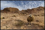 Wadi (riverbed) Al-Farasa.. and Dolly