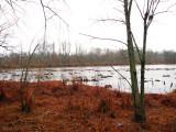 Pond within McKee Besher WMA