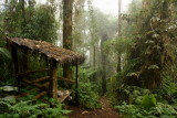 Bellavista Cloud Forest Reserve (2009)