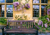Wisteria and Bench