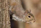 squirrel 22