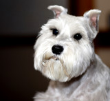 Frankie portrait