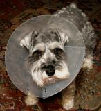 Poor pup!