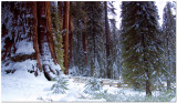 Sequoia National Park December 2007