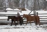 Kelley Farm in Winter