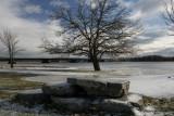 Tree and StonesDecember 4, 2007