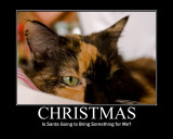 Cat Waiting for Chistmas 03.jpg