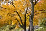Autumn Leaves in Virginia 2007