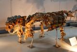 Dinosaur skeleton, Museum of Natural History