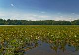 Powells Creek, Leesylvania State Park,  VA