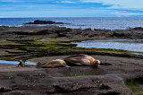 Sea Lions and Marine Iguana