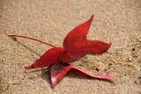 Leaf on Shore of Potomac River