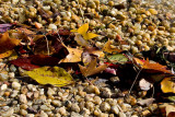 Leaves on Shore of Potomac