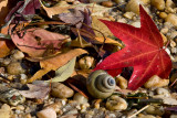 Autumn Leaves on Shore of Potomac