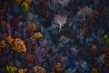 Fall Trees around Blue Stream