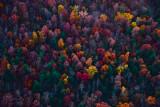 Fall Trees Approaching Shenandoah Mountains