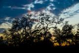 Sunset at Wekiva State Park, FL