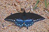 Butterfly at Leesylvania
