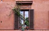 La finestra delle piante grasse