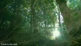 Il bosco in una stanza - la forêt dans le studio - the greenwood in the room