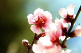 flores_flowers_fleurs