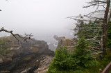 Quoddy Head SP - Cliff trail