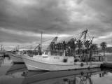 Shrimp Boat - Fulton Harbor