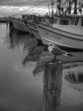 Gull and Shrimp Boats