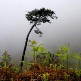 Western Madeira