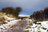 Dune path to the beach