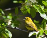 Birding Trips 2010