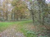Herfst in de tuin van Kasteel Geldrop