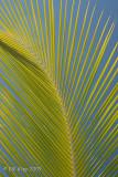 Palm Branch Anegada BVIs