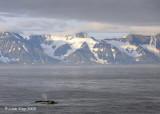 Humpback Whales, Svalbard Norway