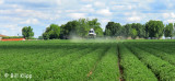 Spraying the Crops 1