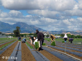 Planting Season in Brentwood 1