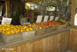 Smith Family Farms Brentwood 4