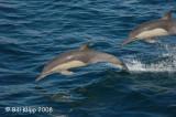 Bottlenose Dolphins 3, Baja