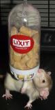 Lixit Food Hopper