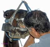 Veterinarian - Equine  Dentistry