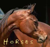 Horses, Farriers, Equine Dentistry