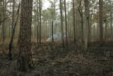 prescribed habitat burning