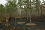 cavity tree cluster