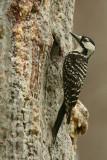 on resin covered nest tree