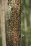 on resin nest tree