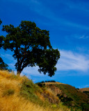 Sunol Ridge